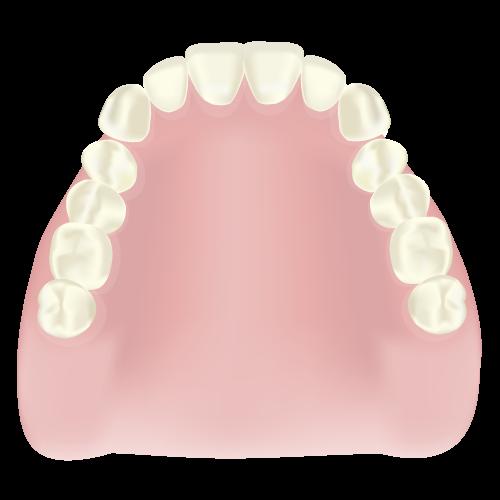 保険の総入れ歯について